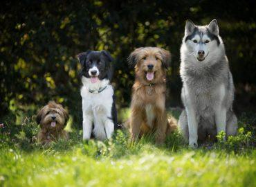 Nitra bude hostiteľkou výstavy Dog Expo 2019