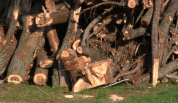 Spílené stromy a náhradná výsadba