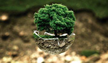 Príďte zasadiť svoj strom