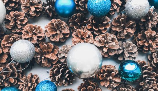 Botanická záhrada SPU opäť otvorila svoje brány milovníkom Vianoc