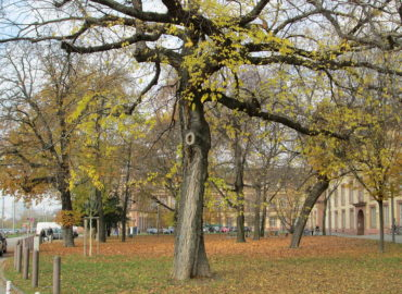 Tip od vás: Je vhodný čas vykonávať rez stromov?