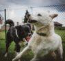Obyvateľov Párovských hájov ohrozujú nezabezpečené psy
