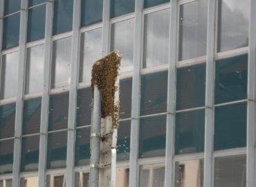 Prípady mestskej polície: Zatúlané včely, nepozorná vodička aj napadnutá žena