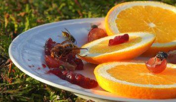 Poradňa: Uštipnutie hmyzom môže spôsobiť vážnu alergickú reakciu
