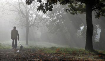 Predpoveď počasia: Ďalší týždeň s jesennými hmlami