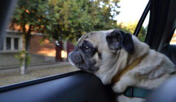 Ako sa obliekať a správať počas leta? S tmavším oblečením sa na chvíľu rozlúčte. Deti a zvieratá vo vozidle rozhodne nenechávajte!