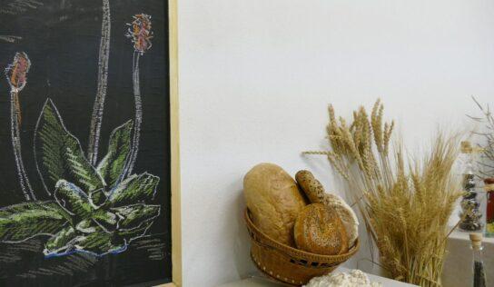 Kráľovstvo rastlín v Tribečskom múzeu